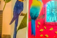 coco-bongo-ecuador-artist013