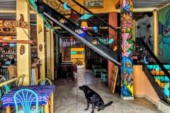 coco-bongo-hostel-bahia-de-caraquez-catfish-1